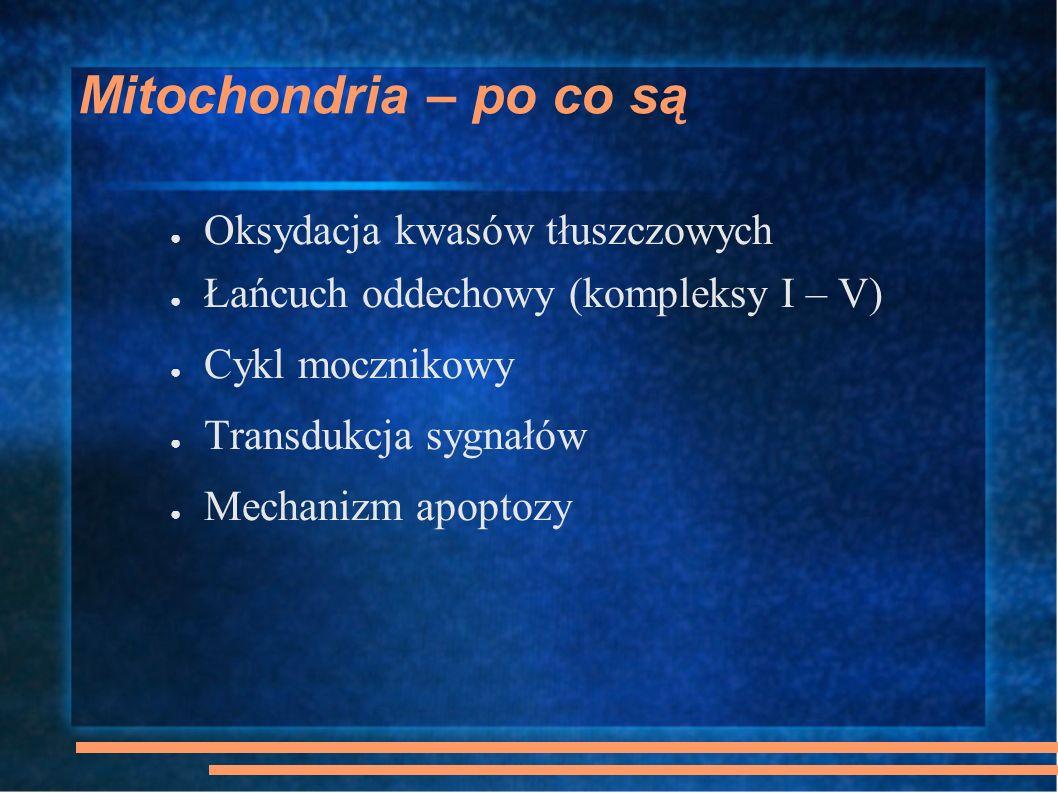 Mitochondria W każdej komórce jest kilkaset mitochondriów W każdym mitochondrium jest 4-10 mtDNA mtDNA: 13 białek fosforylacji oksydacyjnej, 22 tRNA i 2 rRNA