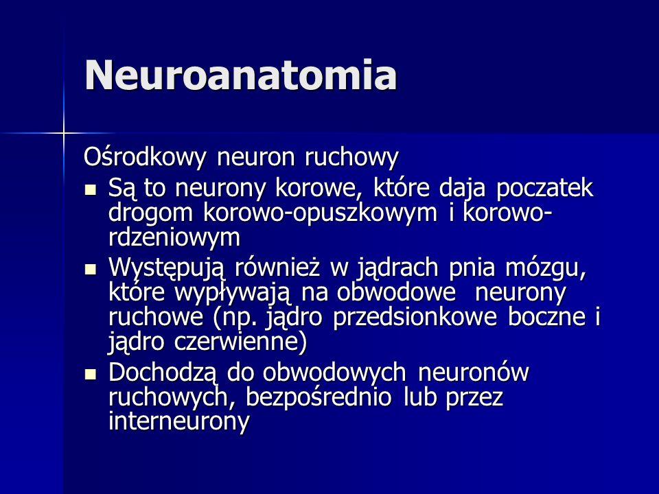 Neuroanatomia Ośrodkowy neuron ruchowy Są to neurony korowe, które daja poczatek drogom korowo-opuszkowym i korowo- rdzeniowym Są to neurony korowe, k