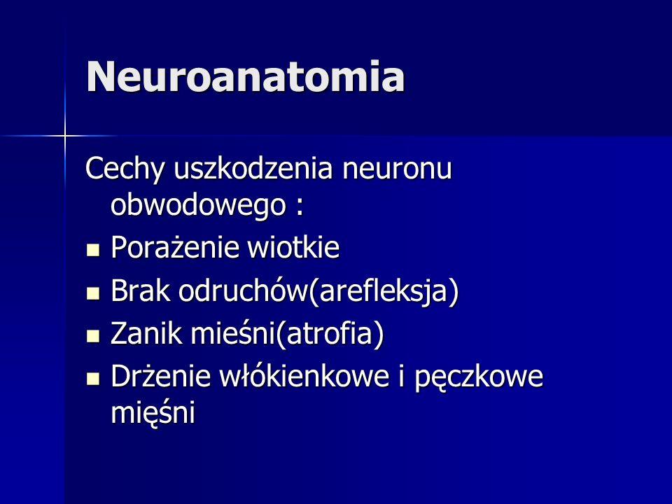 Neuroanatomia Cechy uszkodzenia neuronu obwodowego : Porażenie wiotkie Porażenie wiotkie Brak odruchów(arefleksja) Brak odruchów(arefleksja) Zanik mie