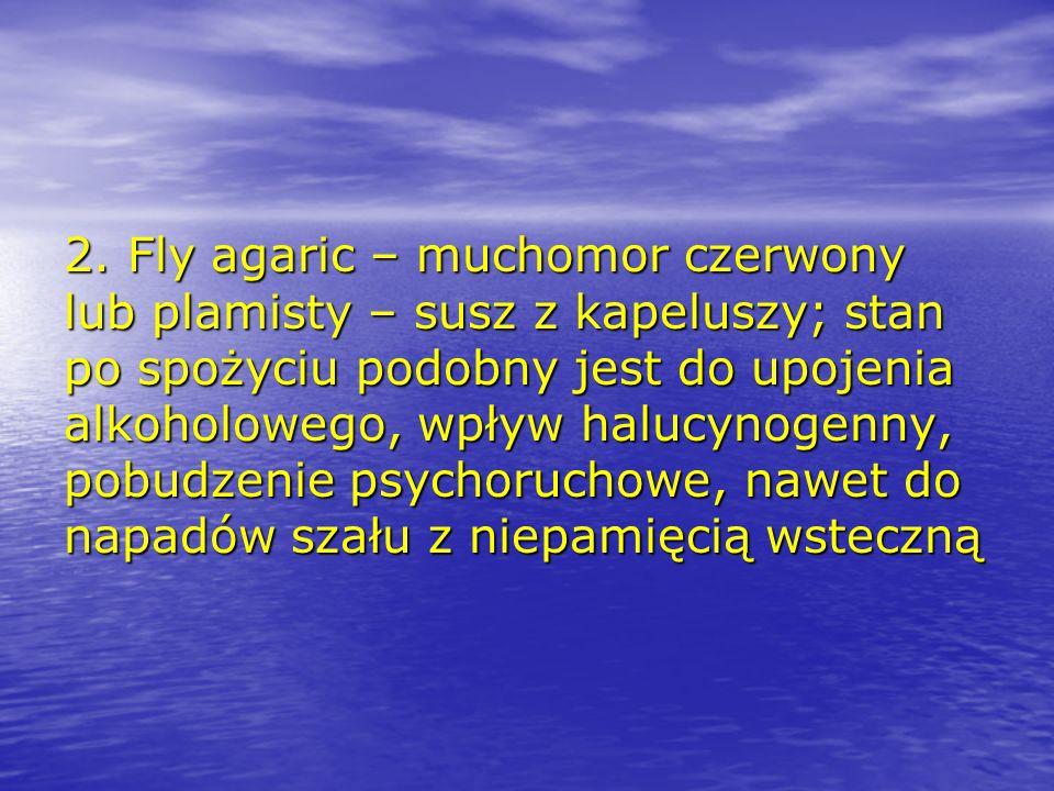 2. Fly agaric – muchomor czerwony lub plamisty – susz z kapeluszy; stan po spożyciu podobny jest do upojenia alkoholowego, wpływ halucynogenny, pobudz