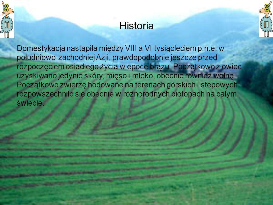 Historia Domestykacja nastąpiła między VIII a VI tysiącleciem p.n.e. w południowo-zachodniej Azji, prawdopodobnie jeszcze przed rozpoczęciem osiadłego