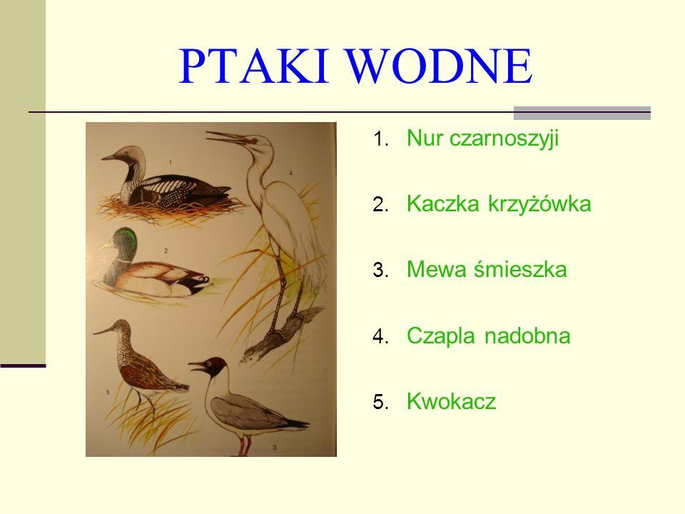 Ptaki terenów otwartych, klifów i lasów 1.Bażant (przedstawiciel kuraków) 2.