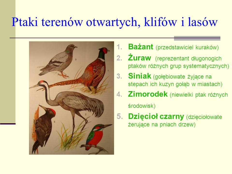 Ptaki terenów otwartych, klifów i lasów 1. Bażant (przedstawiciel kuraków) 2. Żuraw (reprezentant długonogich ptaków różnych grup systematycznych) 3.