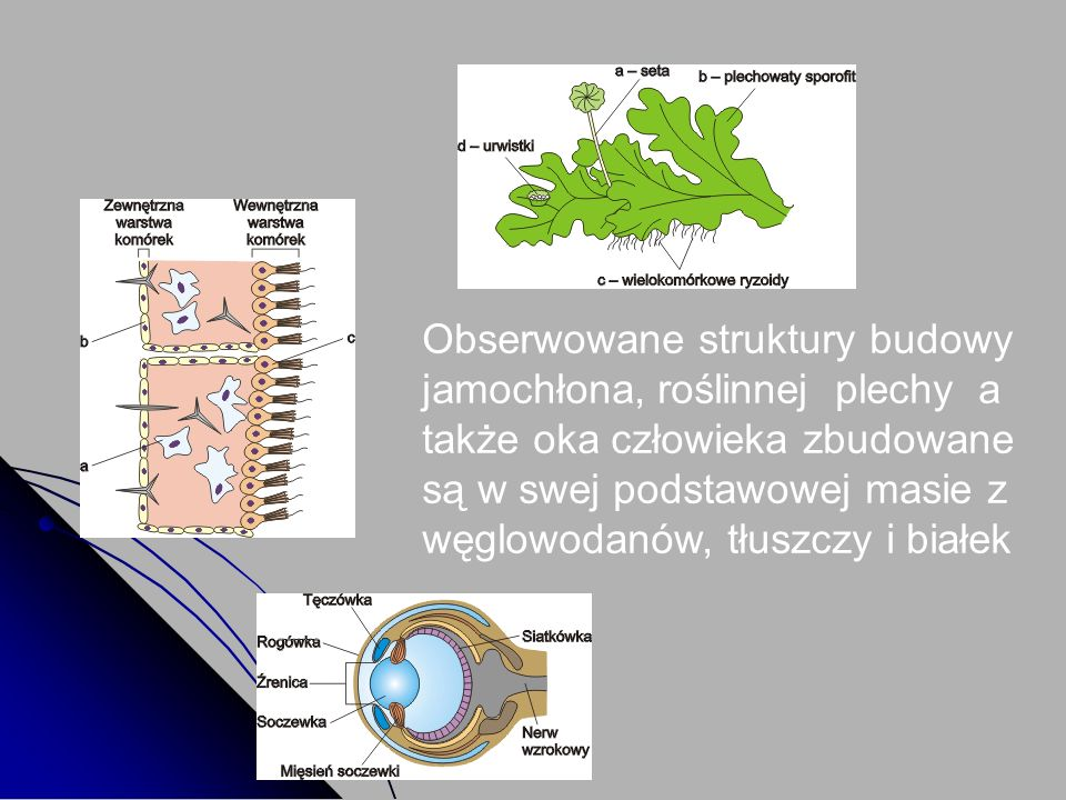 Obserwowane struktury budowy jamochłona, roślinnej plechy a także oka człowieka zbudowane są w swej podstawowej masie z węglowodanów, tłuszczy i białe