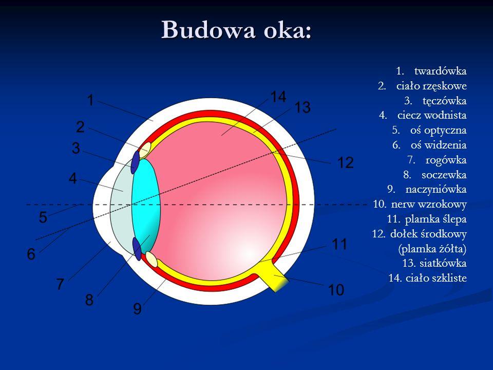 Budowa oka: 1.twardówka 2.ciało rzęskowe 3.tęczówka 4.ciecz wodnista 5.oś optyczna 6.oś widzenia 7.rogówka 8.soczewka 9.naczyniówka 10.nerw wzrokowy 1