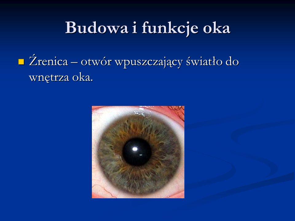 Budowa i funkcje oka Źrenica – otwór wpuszczający światło do wnętrza oka. Źrenica – otwór wpuszczający światło do wnętrza oka.