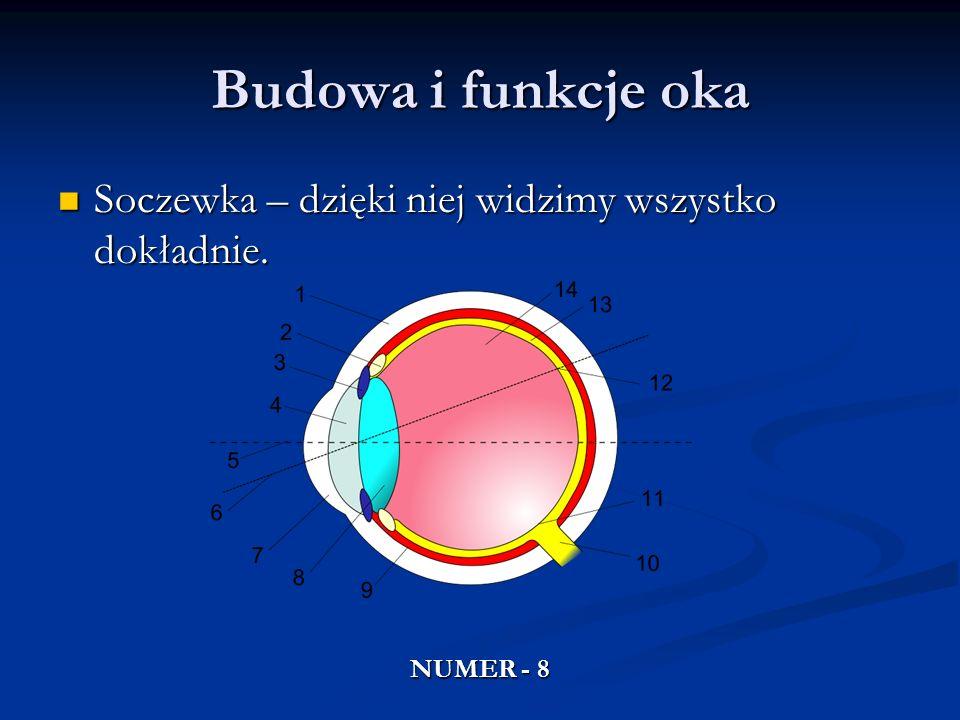 Budowa i funkcje oka Soczewka – dzięki niej widzimy wszystko dokładnie. Soczewka – dzięki niej widzimy wszystko dokładnie. NUMER - 8