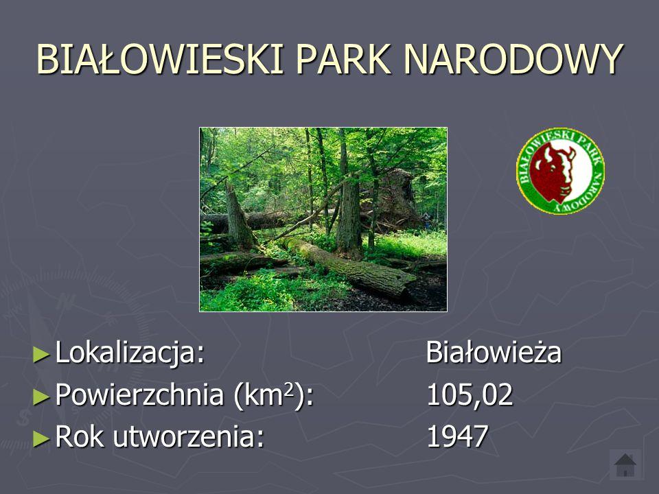 BIAŁOWIESKI PARK NARODOWY Lokalizacja: Białowieża Lokalizacja: Białowieża Powierzchnia (km 2 ): 105,02 Powierzchnia (km 2 ): 105,02 Rok utworzenia:1947 Rok utworzenia:1947