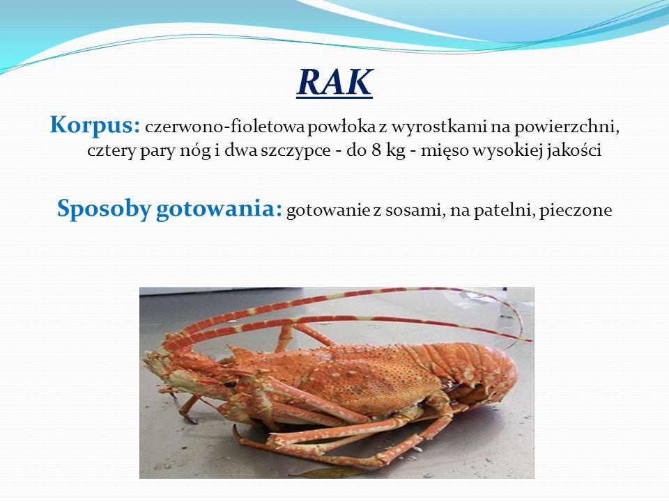 RAK Korpus: czerwono-fioletowa powłoka z wyrostkami na powierzchni, cztery pary nóg i dwa szczypce - do 8 kg - mięso wysokiej jakości Sposoby gotowani