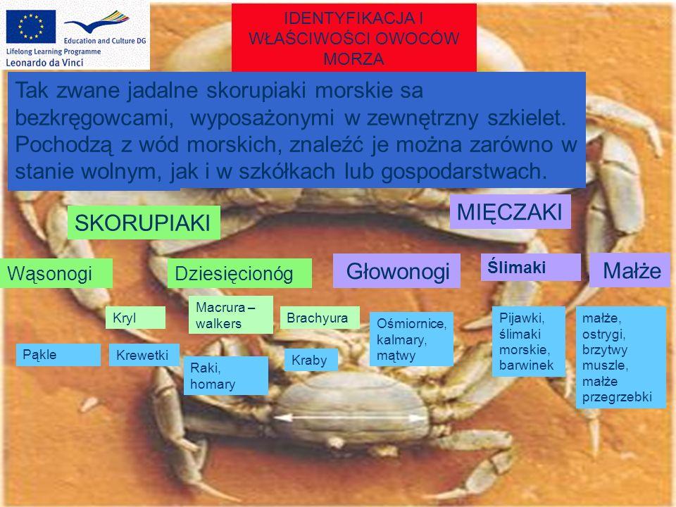 IDENTYFIKACJA I WŁAŚCIWOŚCI OWOCÓW MORZA It is divided into Tak zwane jadalne skorupiaki morskie sa bezkręgowcami, wyposażonymi w zewnętrzny szkielet.