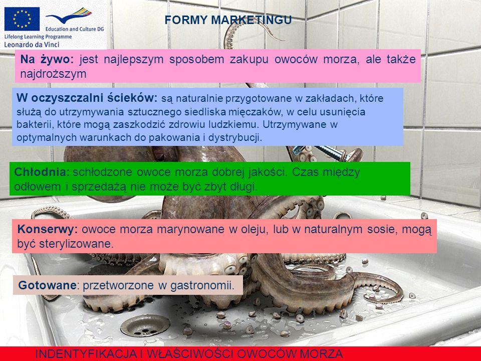 IDENTYFIKACJA I WŁAŚCIWOŚCI OWOCÓW MORZA Krab Głowotułów bardzo duży i nie ma wachlarza w kształcie ogona.