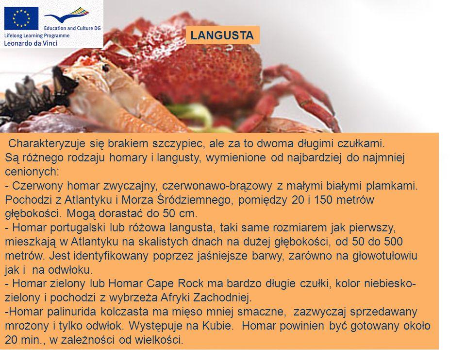 LANGUSTA Charakteryzuje się brakiem szczypiec, ale za to dwoma długimi czułkami. Są różnego rodzaju homary i langusty, wymienione od najbardziej do na