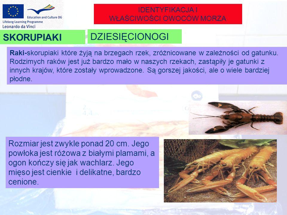 IDENTYFIKACJA I WŁAŚCIWOŚCI OWOCÓW MORZA Raki-skorupiaki które żyją na brzegach rzek, zróżnicowane w zależności od gatunku. Rodzimych raków jest już b
