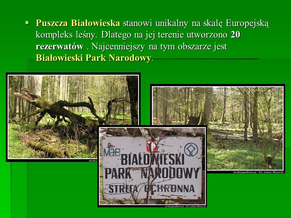 Puszcza Białowieska stanowi unikalny na skalę Europejską kompleks leśny. Dlatego na jej terenie utworzono 20 rezerwatów. Najcenniejszy na tym obszarze