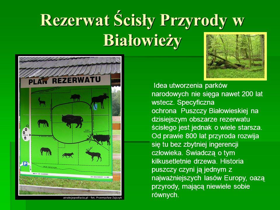 Rezerwat Ścisły Przyrody w Białowieży Idea utworzenia parków narodowych nie sięga nawet 200 lat wstecz. Specyficzna ochrona Puszczy Białowieskiej na d