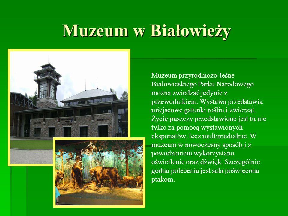 Muzeum w Białowieży Muzeum przyrodniczo-leśne Białowieskiego Parku Narodowego można zwiedzać jedynie z przewodnikiem. Wystawa przedstawia miejscowe ga