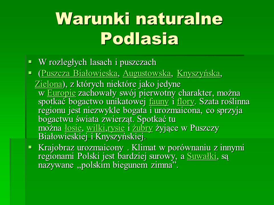 Warunki naturalne Podlasia W rozległych lasach i puszczach W rozległych lasach i puszczach (Puszcza Białowieska, Augustowska, Knyszyńska, (Puszcza Bia