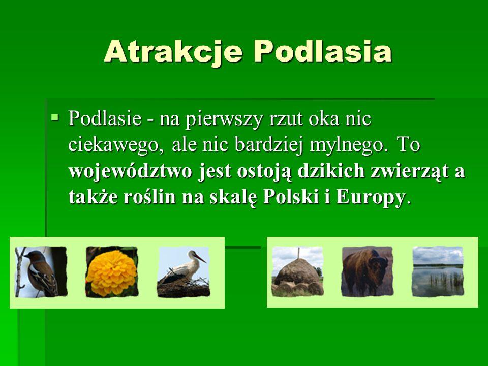 Atrakcje Podlasia Podlasie - na pierwszy rzut oka nic ciekawego, ale nic bardziej mylnego. To województwo jest ostoją dzikich zwierząt a także roślin