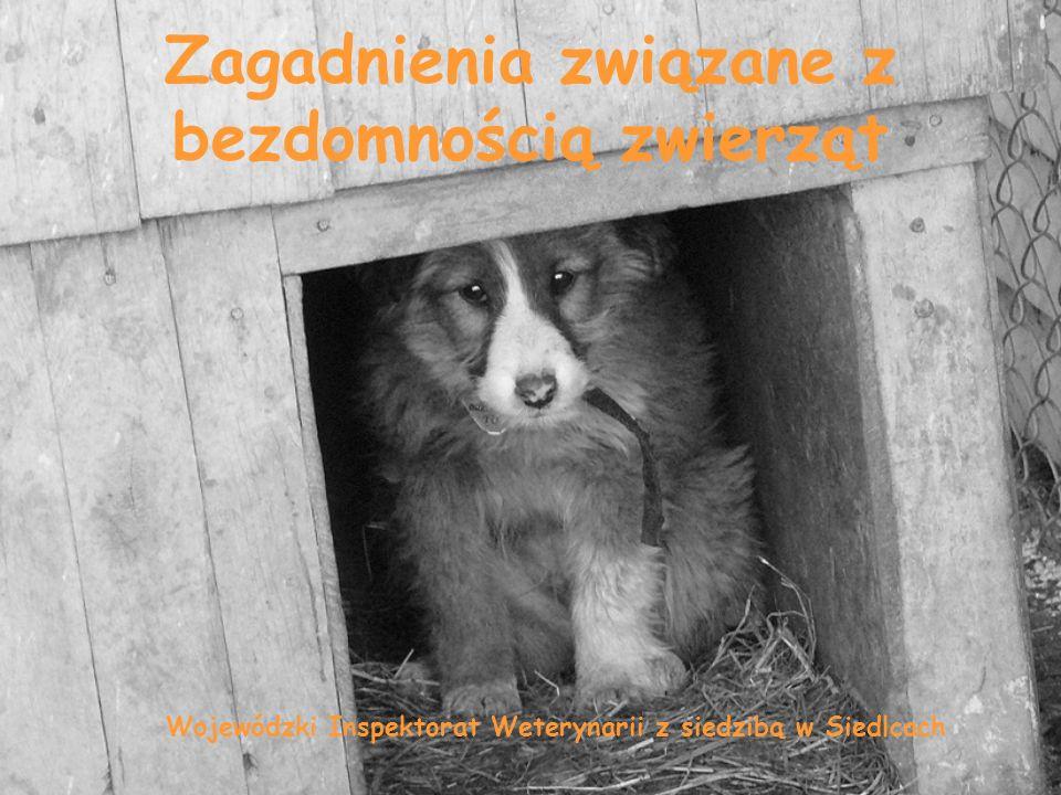 Zagadnienia związane z bezdomnością zwierząt Wojewódzki Inspektorat Weterynarii z siedzibą w Siedlcach