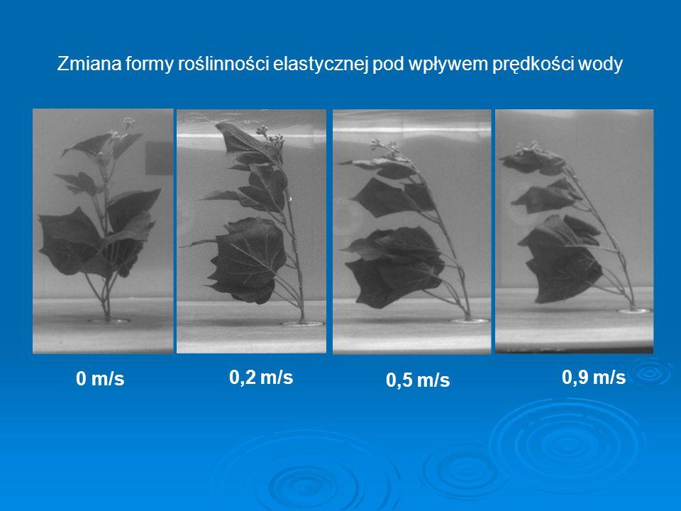 Zmiana formy roślinności elastycznej pod wpływem prędkości wody 0 m/s 0,2 m/s 0,5 m/s 0,9 m/s