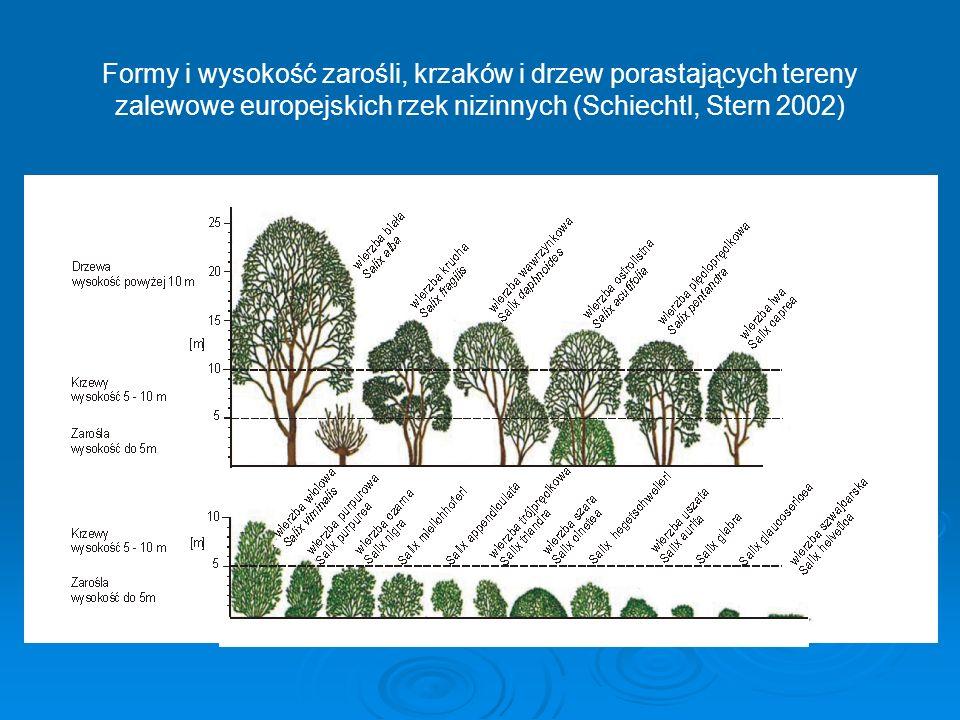 Formy i wysokość zarośli, krzaków i drzew porastających tereny zalewowe europejskich rzek nizinnych (Schiechtl, Stern 2002)