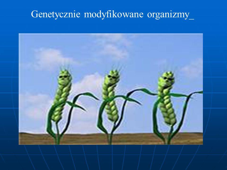 Genetycznie modyfikowane organizmy_