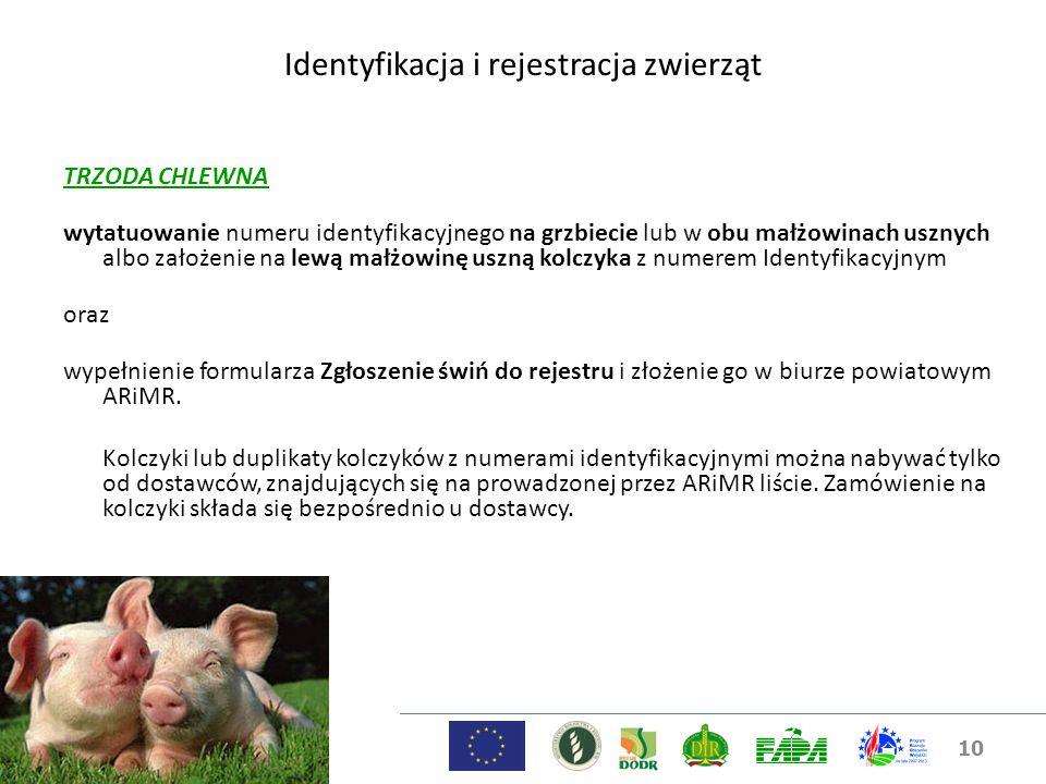 10 Identyfikacja i rejestracja zwierząt TRZODA CHLEWNA wytatuowanie numeru identyfikacyjnego na grzbiecie lub w obu małżowinach usznych albo założenie