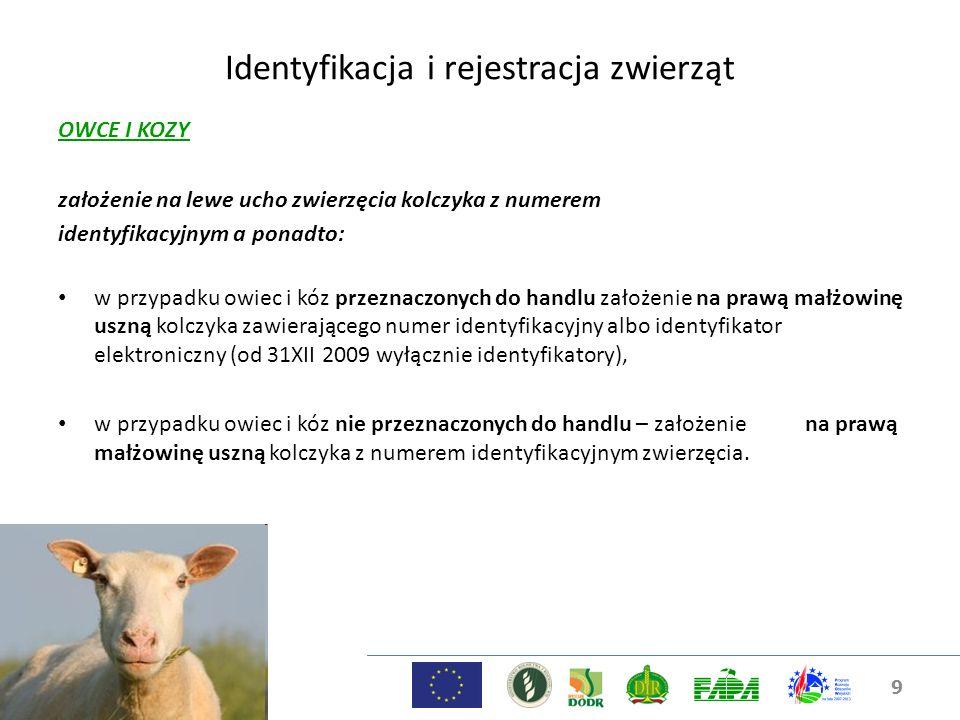9 Identyfikacja i rejestracja zwierząt OWCE I KOZY założenie na lewe ucho zwierzęcia kolczyka z numerem identyfikacyjnym a ponadto: w przypadku owiec