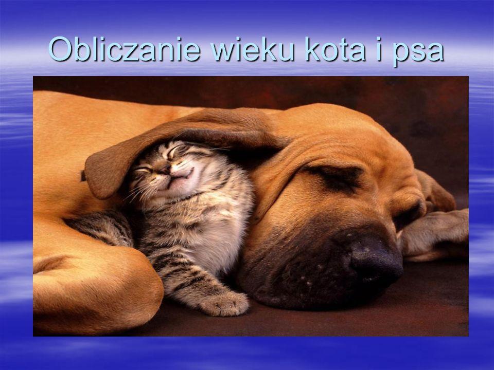 Obliczanie wieku kota i psa