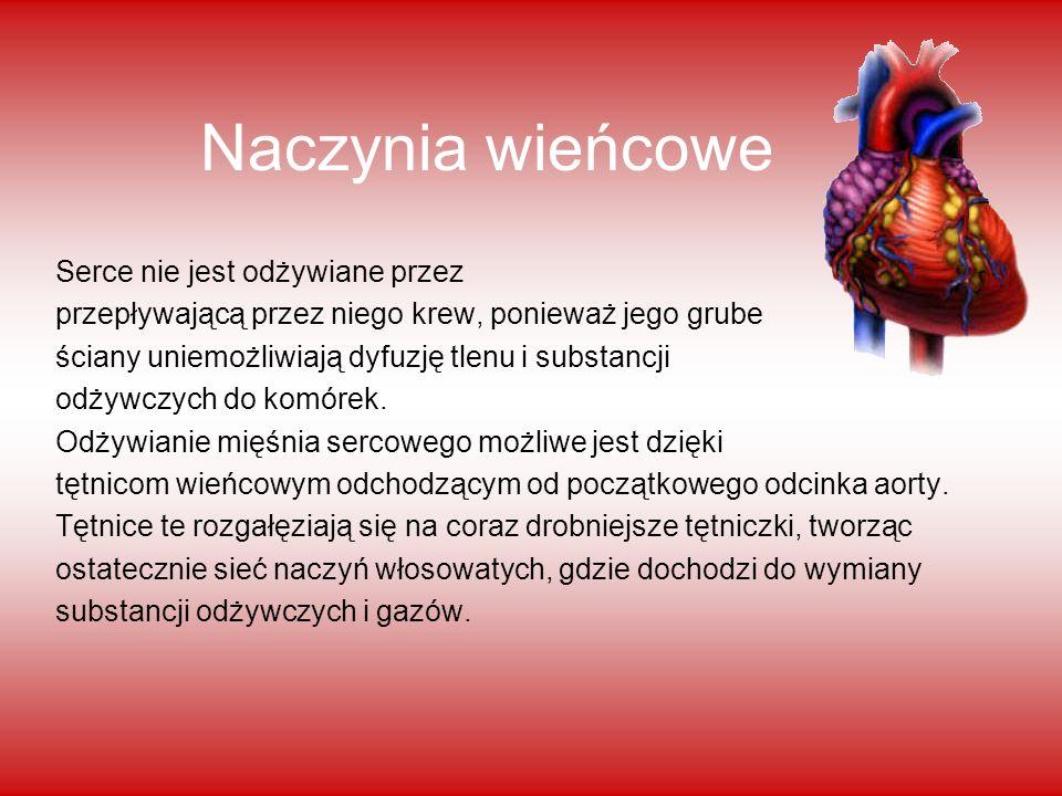 Naczynia wieńcowe Serce nie jest odżywiane przez przepływającą przez niego krew, ponieważ jego grube ściany uniemożliwiają dyfuzję tlenu i substancji