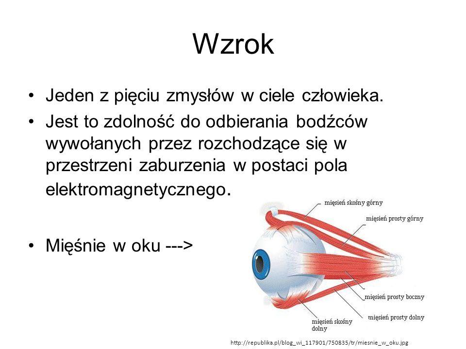 Wzrok Jeden z pięciu zmysłów w ciele człowieka. Jest to zdolność do odbierania bodźców wywołanych przez rozchodzące się w przestrzeni zaburzenia w pos