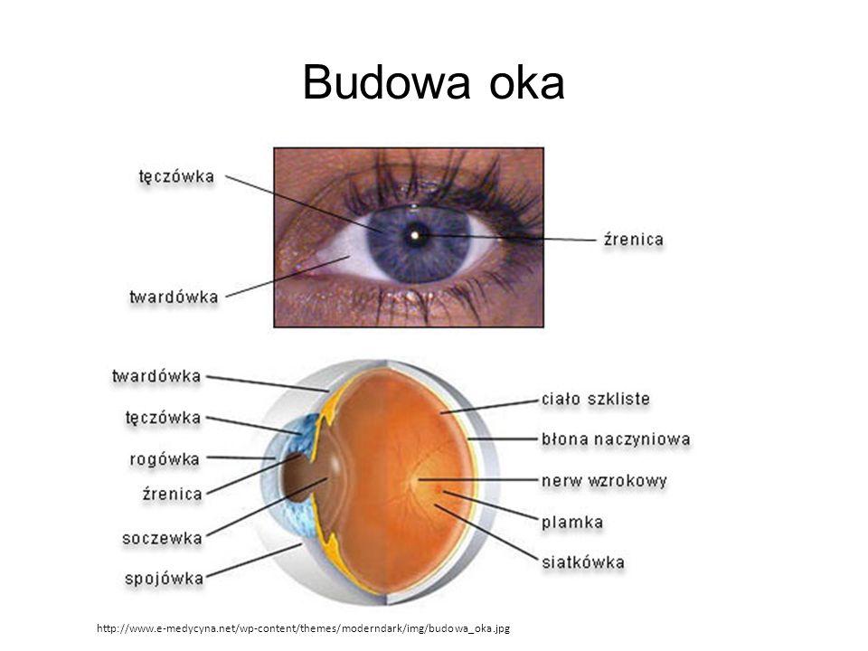 Budowa oka http://www.e-medycyna.net/wp-content/themes/moderndark/img/budowa_oka.jpg