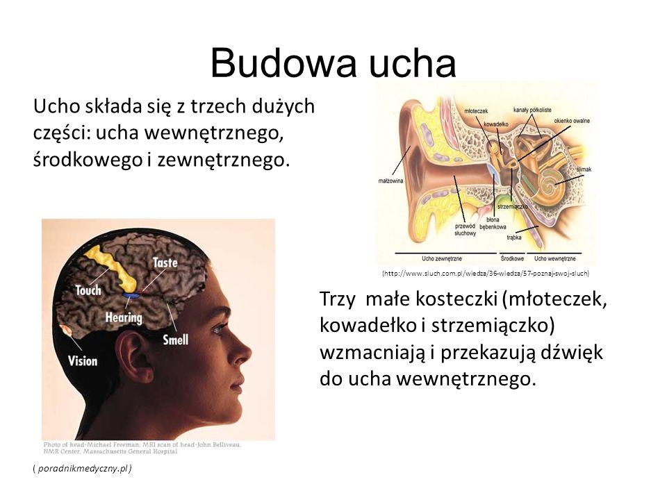 Budowa ucha Ucho składa się z trzech dużych części: ucha wewnętrznego, środkowego i zewnętrznego. Trzy małe kosteczki (młoteczek, kowadełko i strzemią
