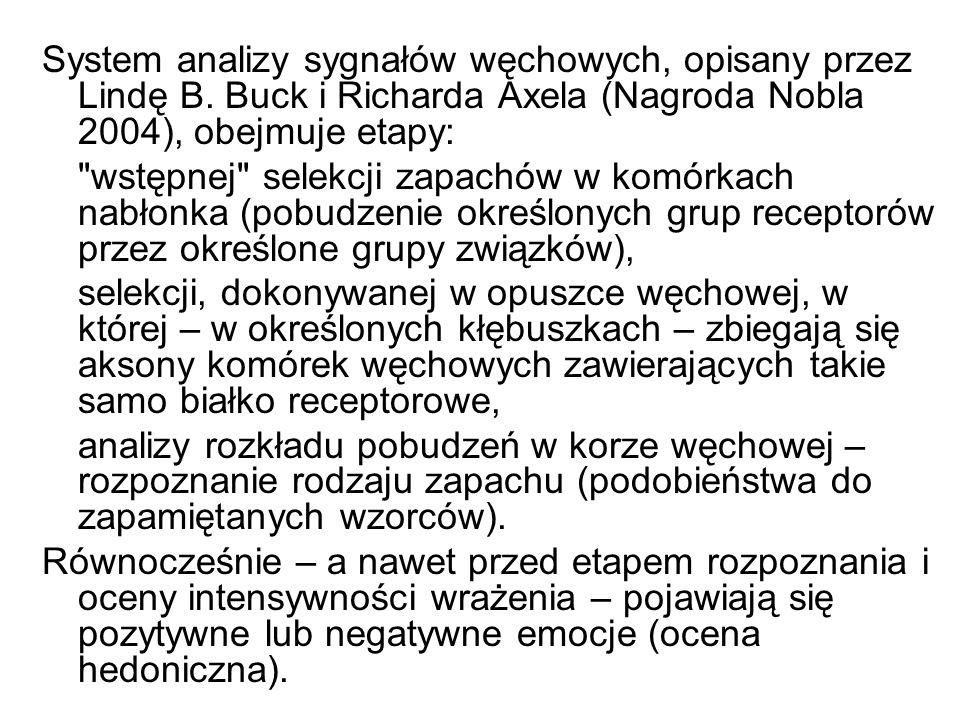 System analizy sygnałów węchowych, opisany przez Lindę B. Buck i Richarda Axela (Nagroda Nobla 2004), obejmuje etapy: