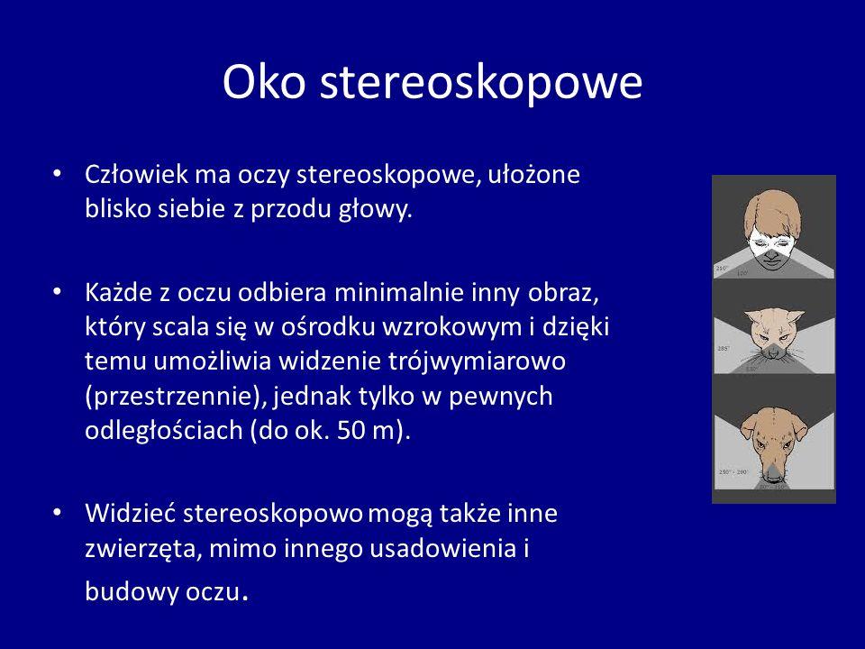 Oko stereoskopowe Człowiek ma oczy stereoskopowe, ułożone blisko siebie z przodu głowy. Każde z oczu odbiera minimalnie inny obraz, który scala się w