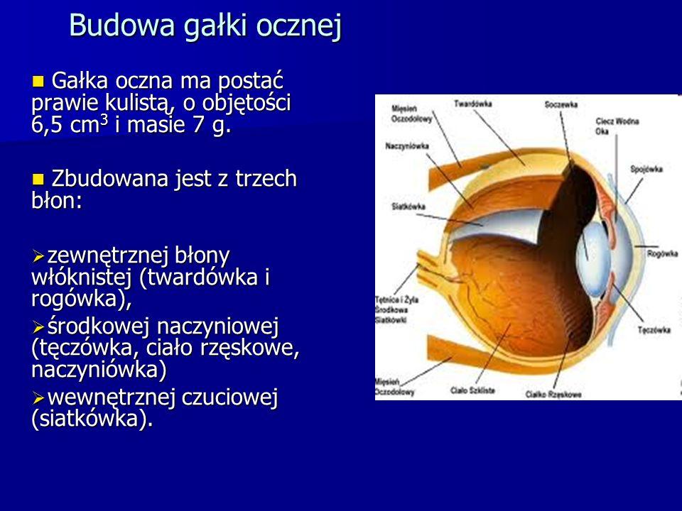 Budowa gałki ocznej Gałka oczna ma postać prawie kulistą, o objętości 6,5 cm 3 i masie 7 g. Gałka oczna ma postać prawie kulistą, o objętości 6,5 cm 3