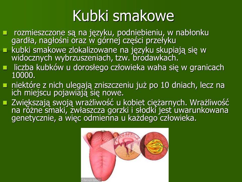 Kubki smakowe rozmieszczone są na języku, podniebieniu, w nabłonku gardła, nagłośni oraz w górnej części przełyku rozmieszczone są na języku, podniebi