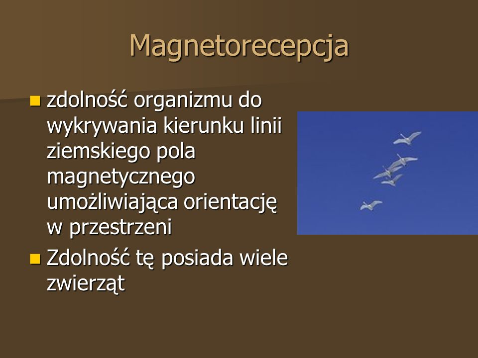 Magnetorecepcja zdolność organizmu do wykrywania kierunku linii ziemskiego pola magnetycznego umożliwiająca orientację w przestrzeni zdolność organizm