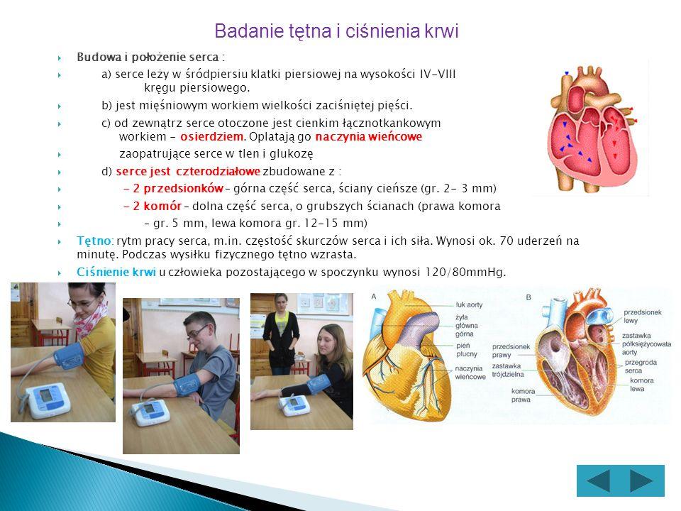 Budowa i położenie serca : a) serce leży w śródpiersiu klatki piersiowej na wysokości IV-VIII kręgu piersiowego.