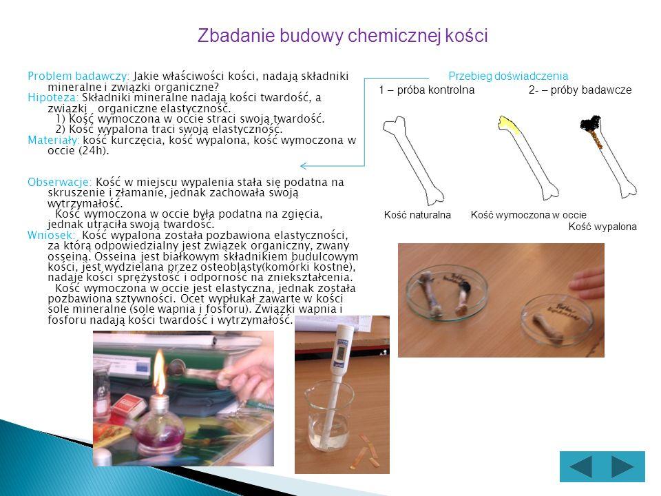 Problem badawczy: Jakie właściwości kości, nadają składniki mineralne i związki organiczne.