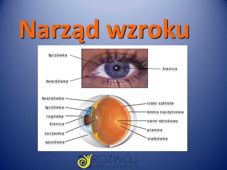 Narząd wzroku