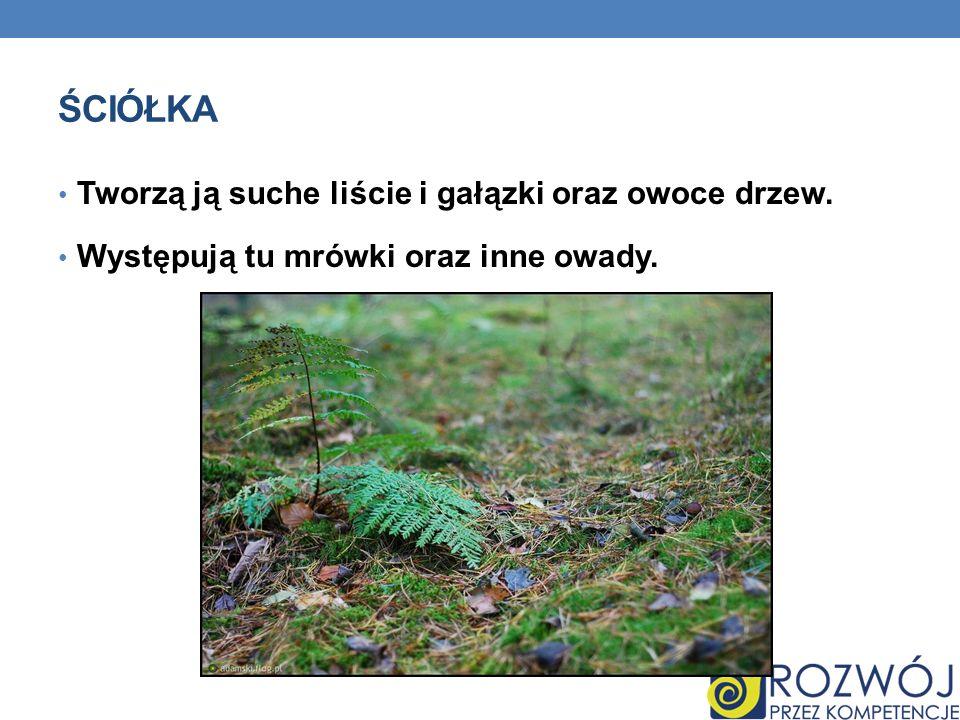 ŚCIÓŁKA Tworzą ją suche liście i gałązki oraz owoce drzew. Występują tu mrówki oraz inne owady.