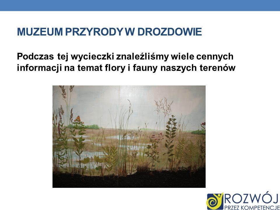 MUZEUM PRZYRODY W DROZDOWIE Podczas tej wycieczki znaleźliśmy wiele cennych informacji na temat flory i fauny naszych terenów
