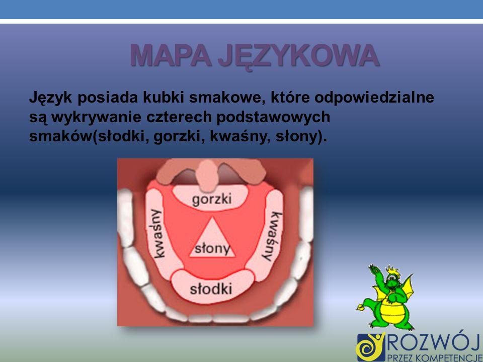 MAPA JĘZYKOWA Język posiada kubki smakowe, które odpowiedzialne są wykrywanie czterech podstawowych smaków(słodki, gorzki, kwaśny, słony).