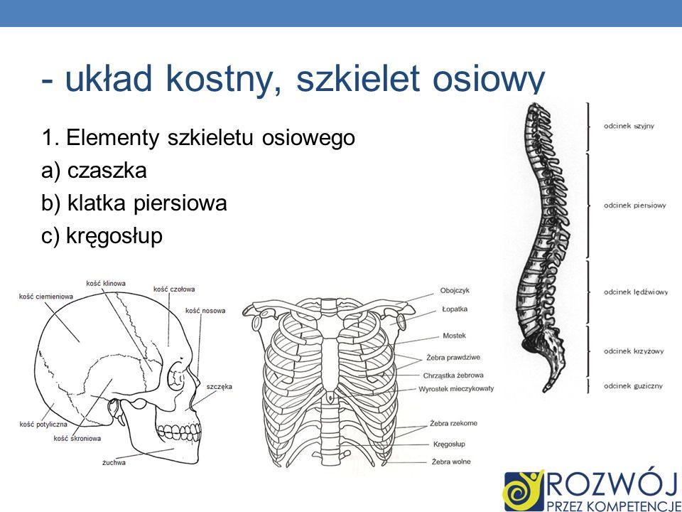 - układ kostny, szkielet osiowy 1. Elementy szkieletu osiowego a) czaszka b) klatka piersiowa c) kręgosłup