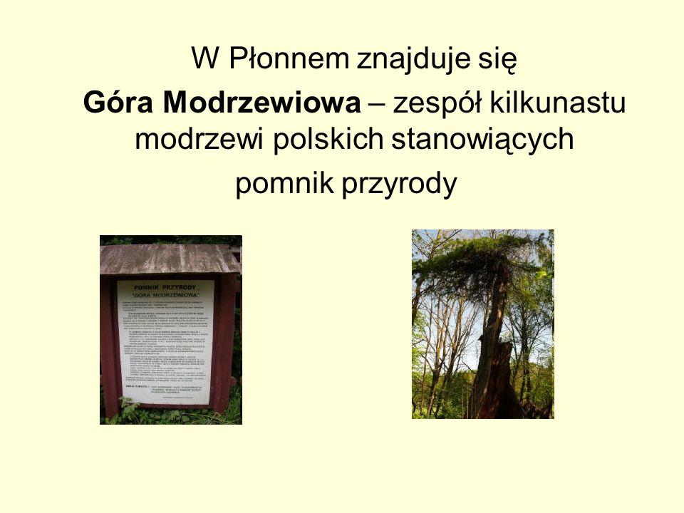 W Płonnem znajduje się Góra Modrzewiowa – zespół kilkunastu modrzewi polskich stanowiących pomnik przyrody