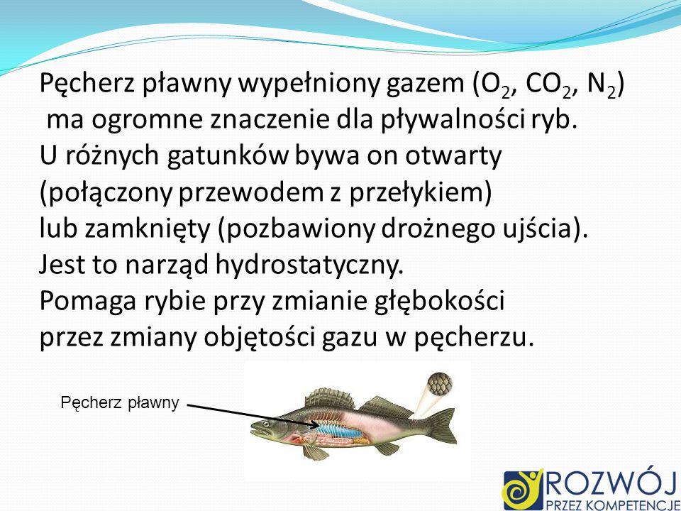 Pęcherz pławny wypełniony gazem (O 2, CO 2, N 2 ) ma ogromne znaczenie dla pływalności ryb. U różnych gatunków bywa on otwarty (połączony przewodem z