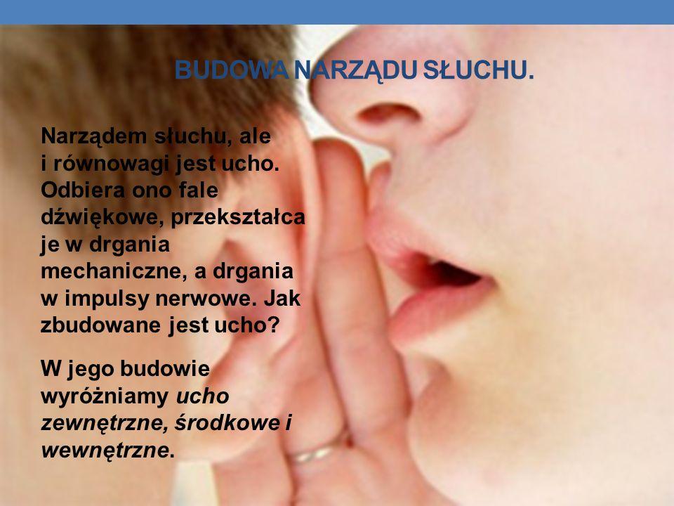 BUDOWA NARZĄDU SŁUCHU. Narządem słuchu, ale i równowagi jest ucho. Odbiera ono fale dźwiękowe, przekształca je w drgania mechaniczne, a drgania w impu