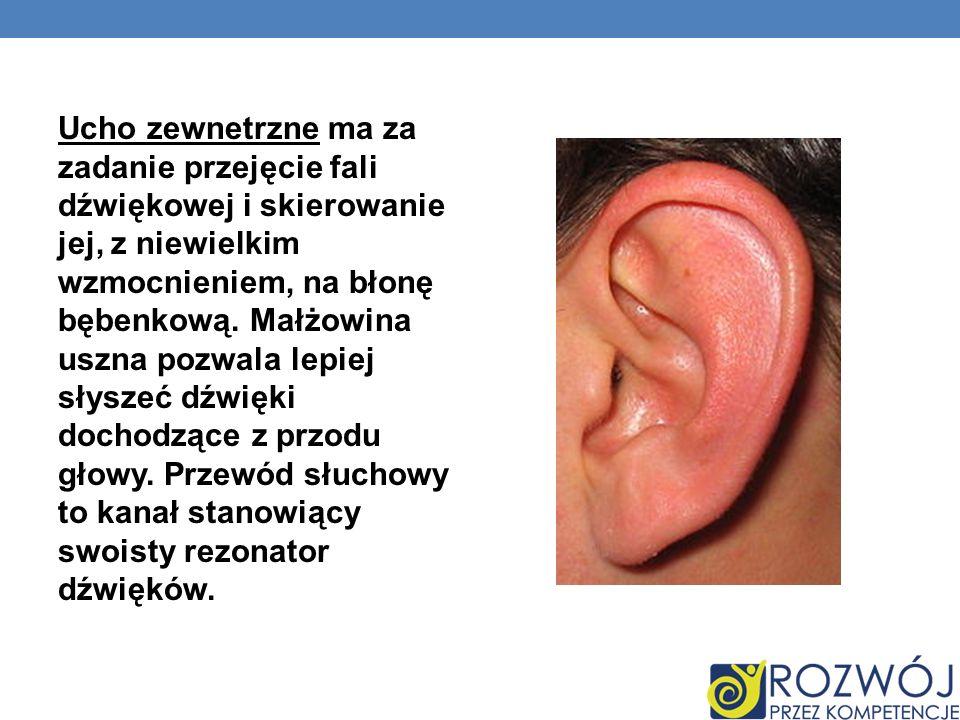 Ucho zewnetrzne ma za zadanie przejęcie fali dźwiękowej i skierowanie jej, z niewielkim wzmocnieniem, na błonę bębenkową. Małżowina uszna pozwala lepi