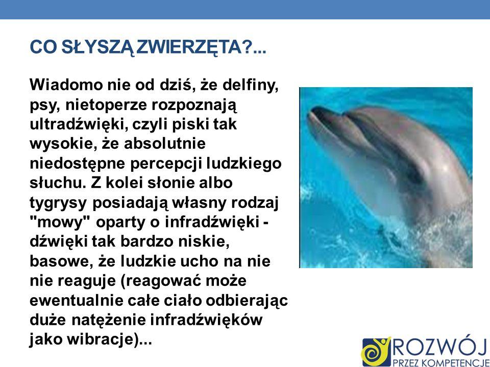 CO SŁYSZĄ ZWIERZĘTA?... Wiadomo nie od dziś, że delfiny, psy, nietoperze rozpoznają ultradźwięki, czyli piski tak wysokie, że absolutnie niedostępne p